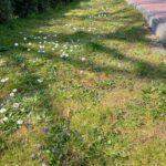 Wiosna w ogrodzie 1