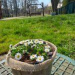Wiosna w ogrodzie 2